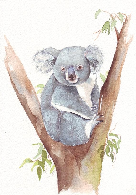 Koala bear painting