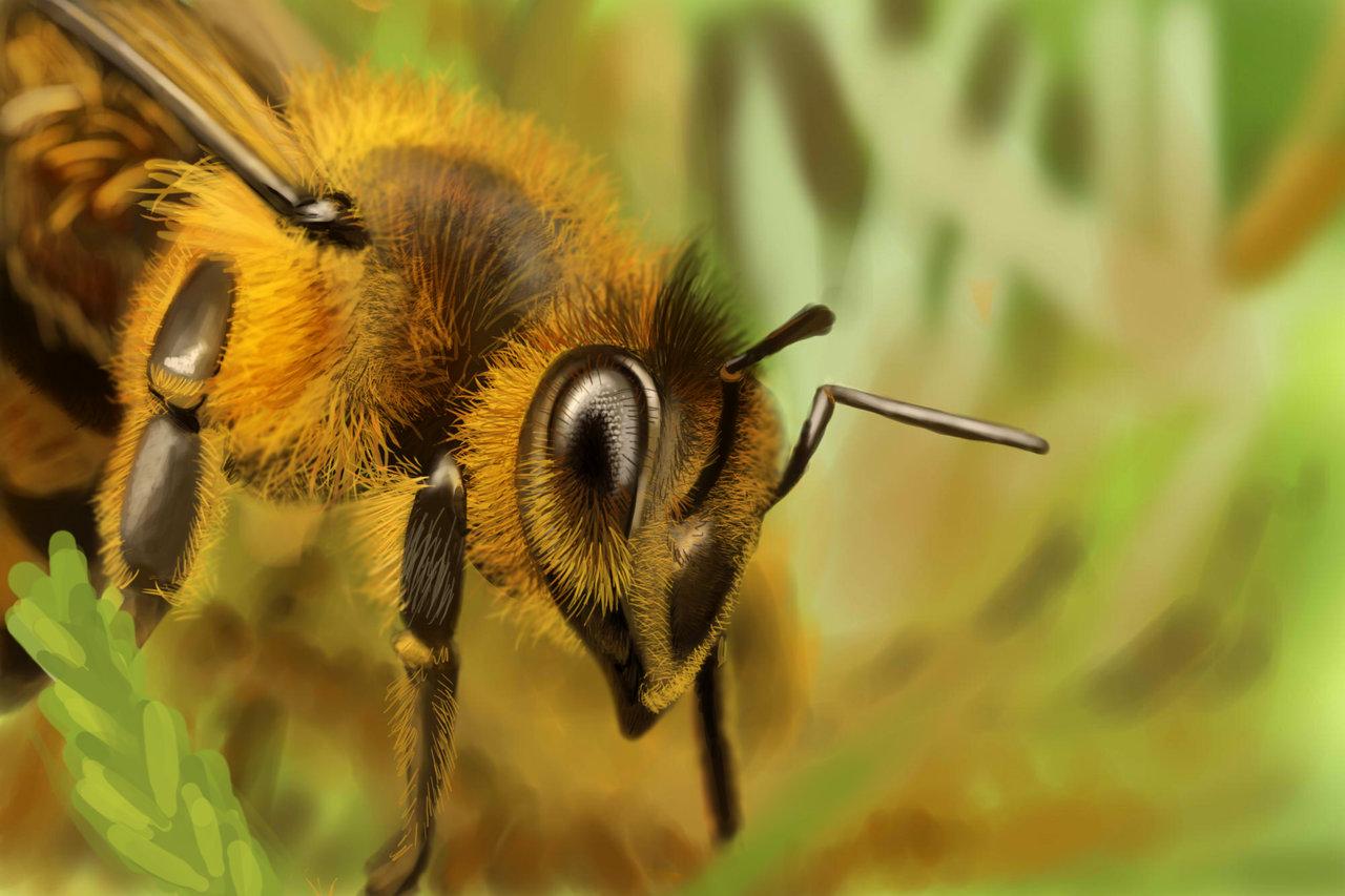 Italian honey bees queen