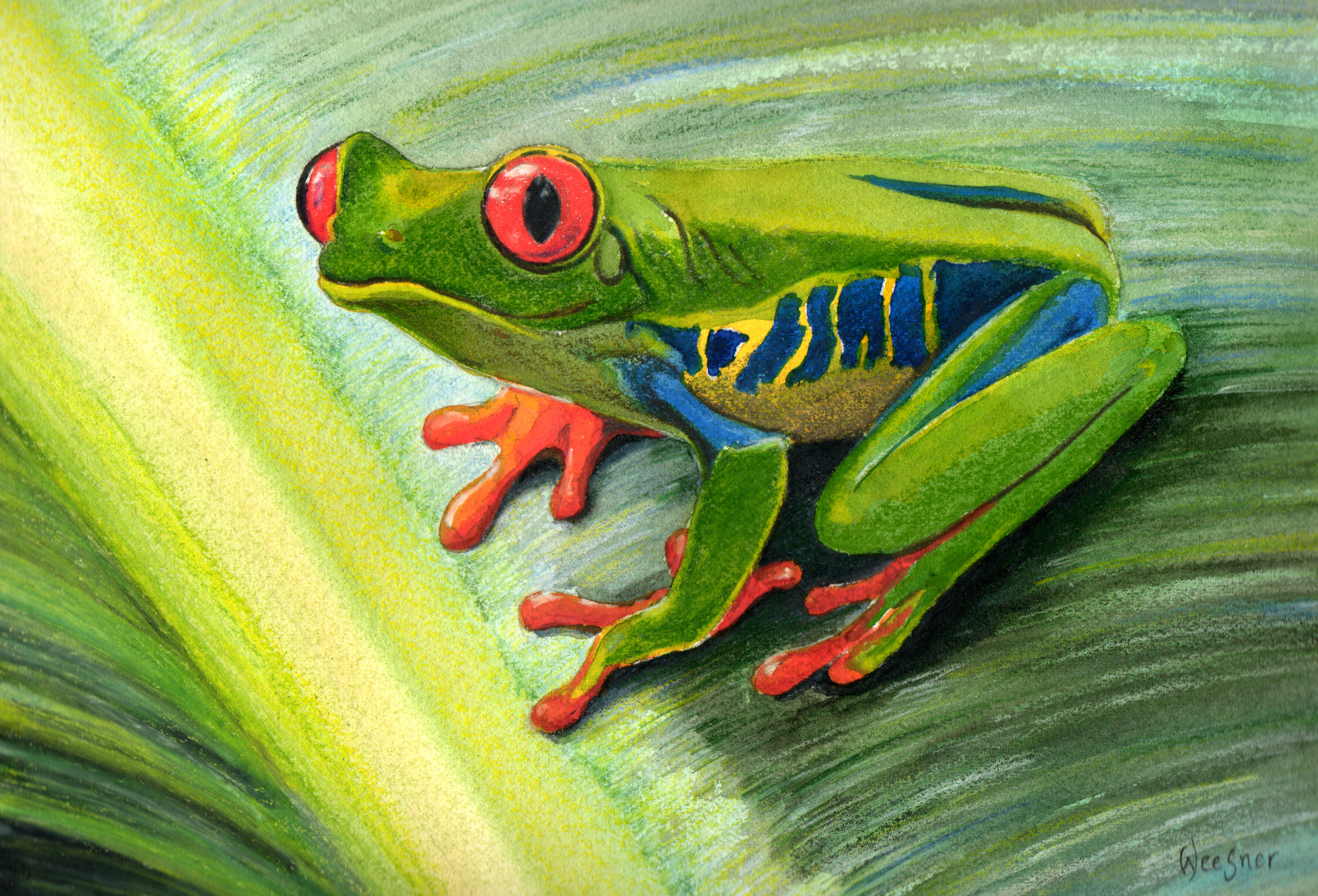 рисование лягушки картинки