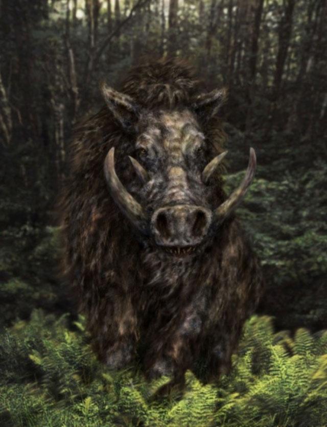 Boar Paintings