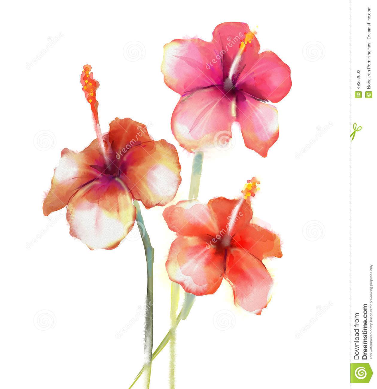 Flower Watercolour Paintings