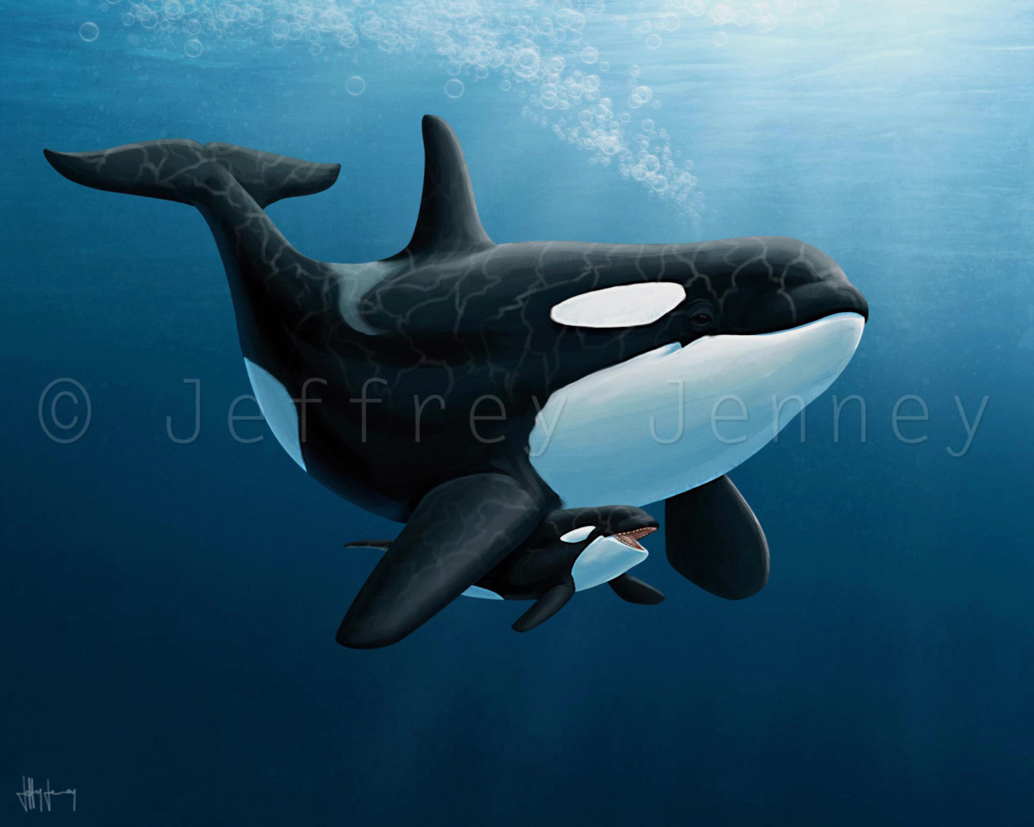 Orca Whale Paintings