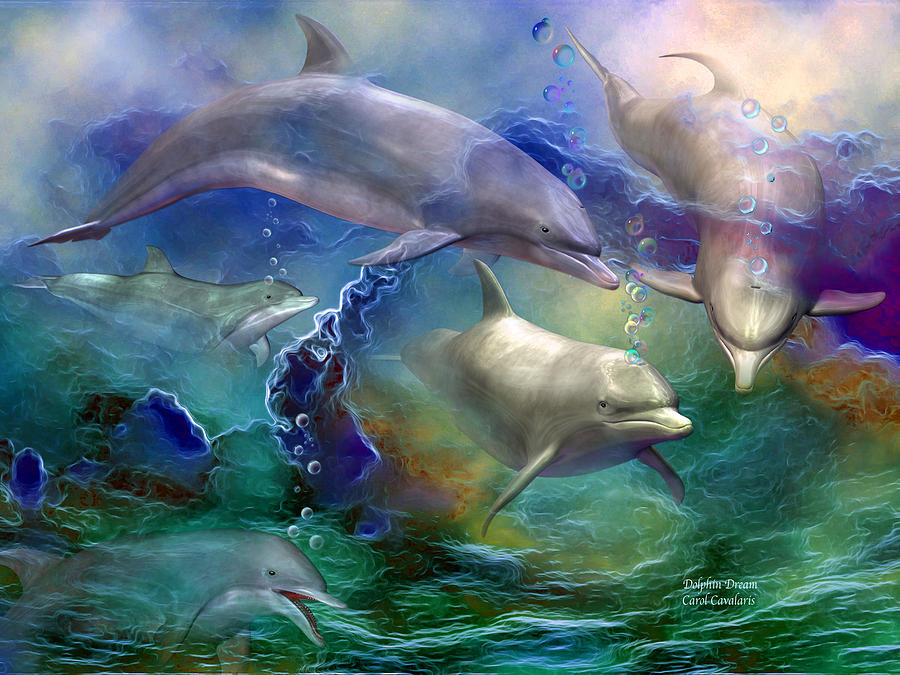 Cool Dolphin Artwork