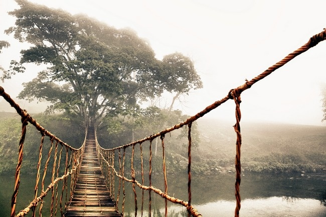 Jungle Journey By Skip N Trees Vietnam And Canvases