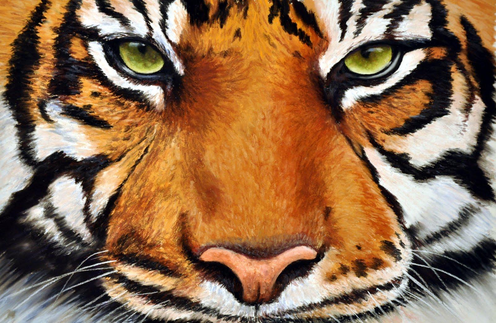Глаза тигров картинки