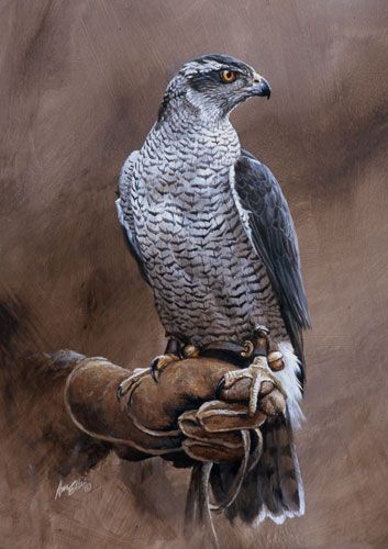 Falconry Paintings