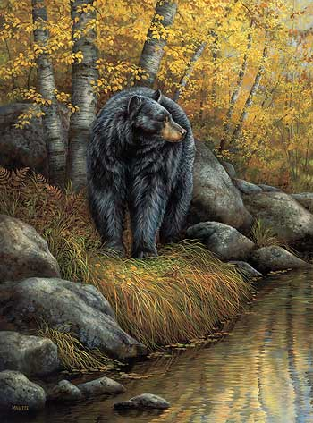 Black Bear Paintings