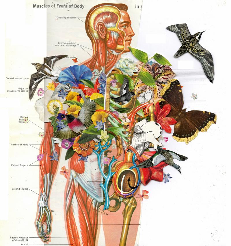 Human Anatomy Paintings