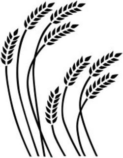 Grain Heads paintings